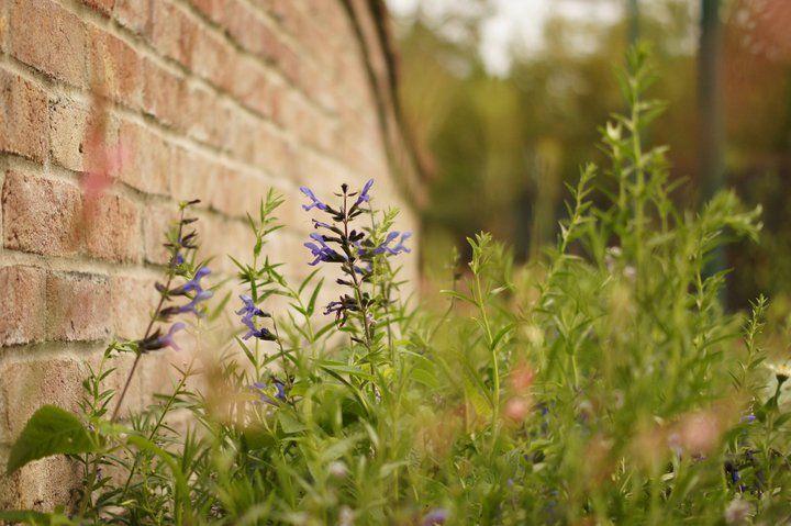 Southern Scape LLC   Landscaping & Outdoor Living Areas   Huntsville & Nashville